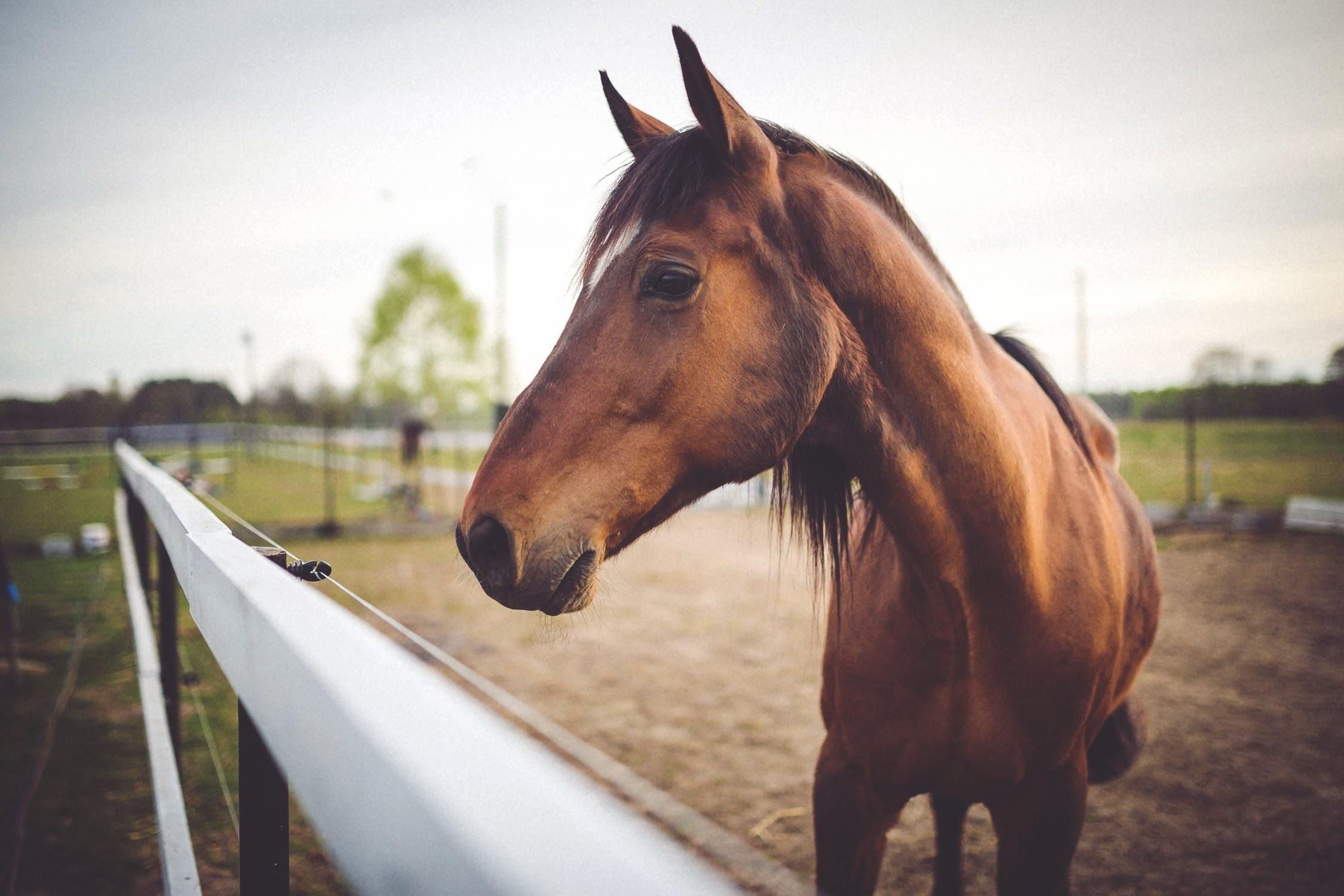 Азербайджан будет экспортировать лошадей в развитые европейские страны